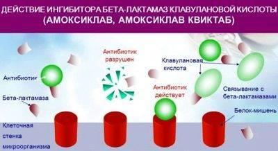 Амоксиклав Amoksiklav