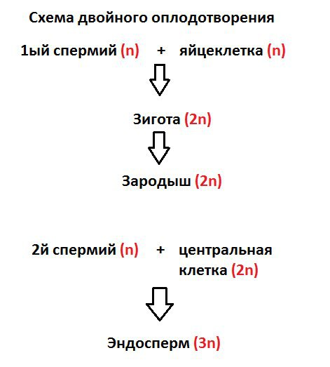 Зачатие по дням - как происходит оплодотворение - запись пользователя нюся (etoilevenera) в сообществе зачатие в категории статьи, полезная информация - babyblog.ru