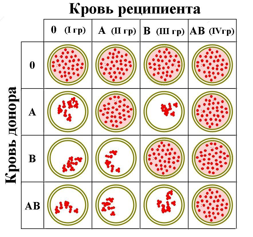 Бактерии. строение бактериальной клетки. формы. фото