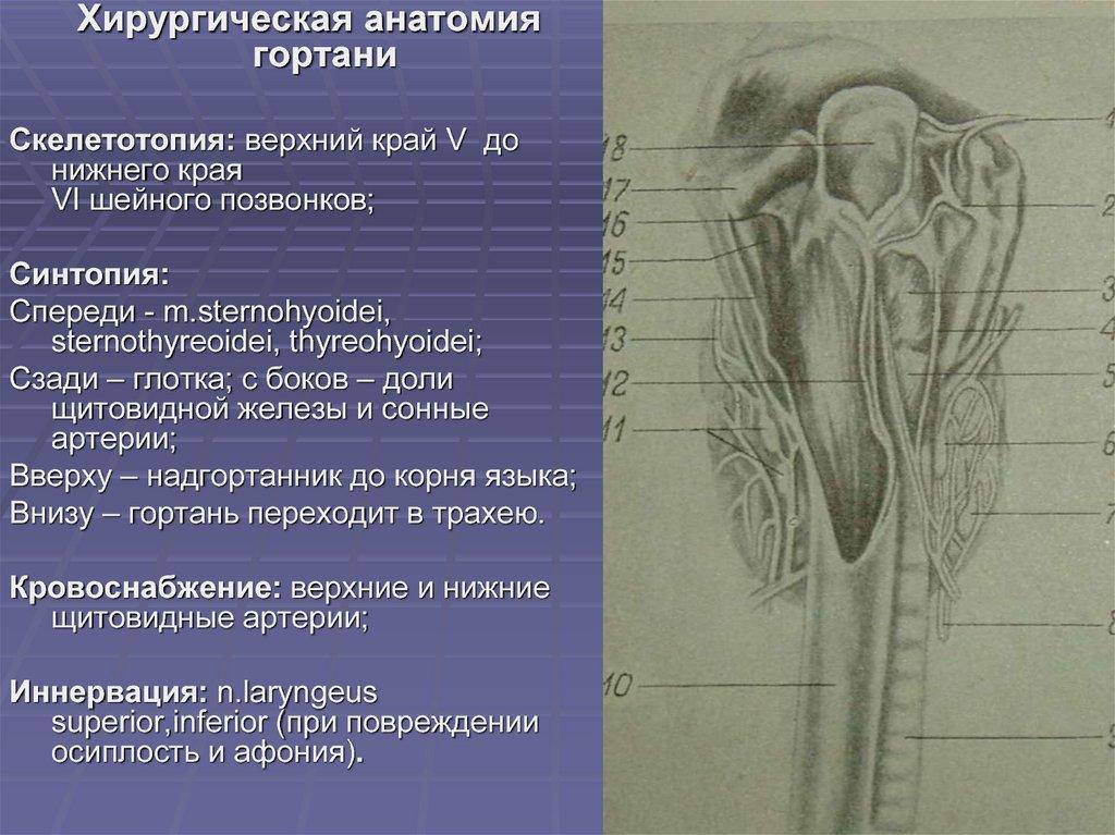 Анализ и диагностика структуры щитовидной железы