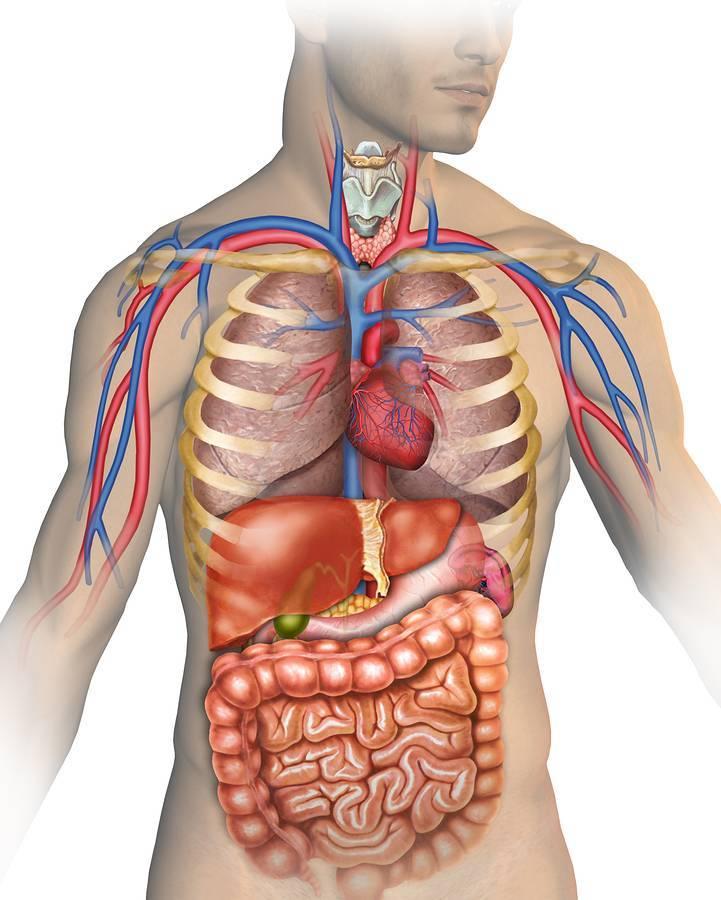 Боль в грудине посередине после кашля
