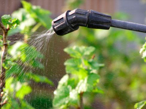 Интавир – инструкция по применению для растений, отзывы дачников