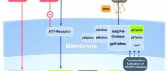 """Таблетки """"артродарин"""": инструкция по применению, аналоги, отзывы"""