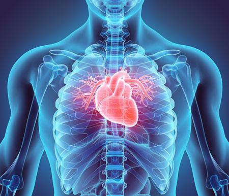 Избыток добавки кальция – риск для сердечно-сосудистой системы