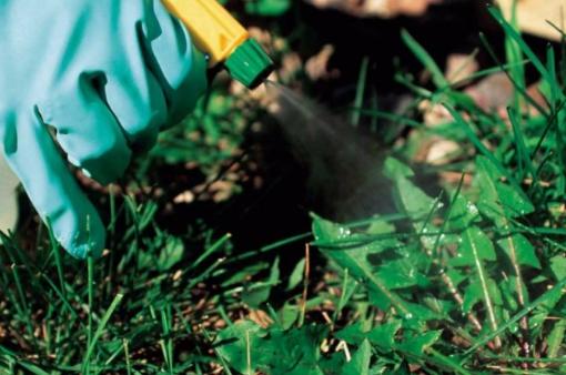 Гербицид «лазурит» от сорняков на картофеле: описание, инструкция по применению