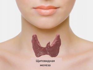 Щитовидная железа:19 признаков проблем
