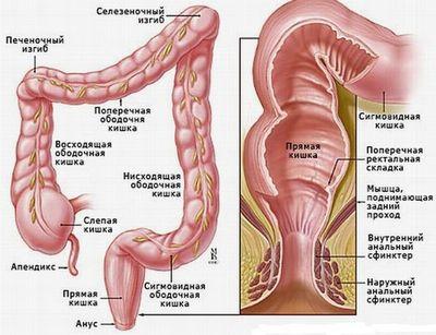 Питание при долихосигма кишечника взрослых
