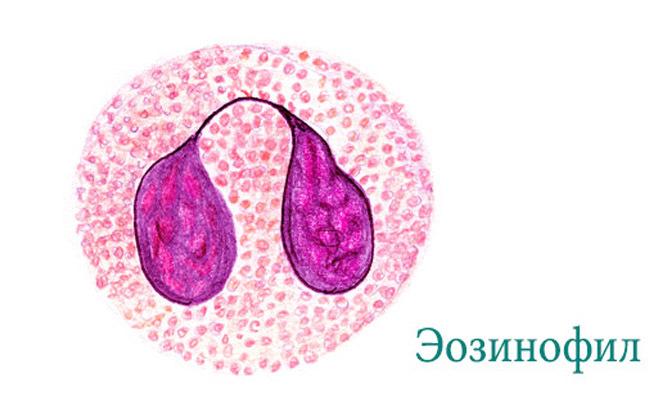 Почему повышены эозинофилы в крови у ребенка