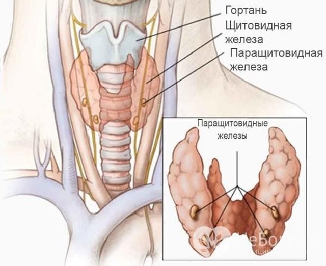 Синдром маккьюн-олбрайта - mccune–albright syndrome