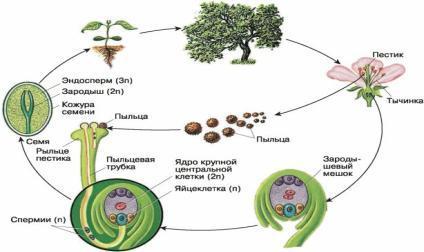 Оплодотворение яйцеклетки — процесс от а до я во времени