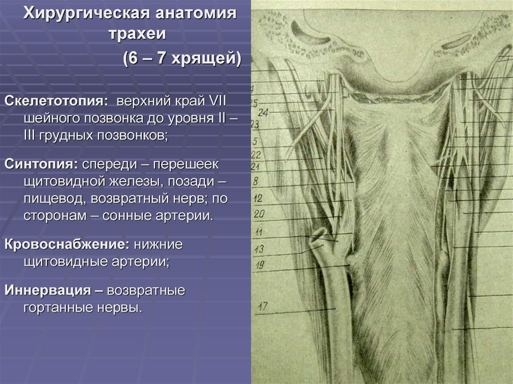 Галина ивановна дядякак сбалансировать гормоны щитовидной железы, надпочечников, поджелудочной железы