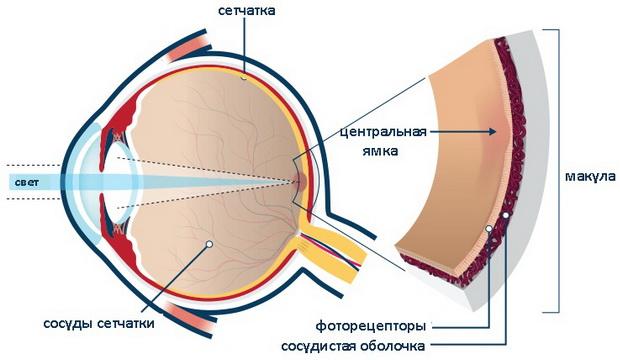 Искажение зрения – причины, диагностика, способы лечения