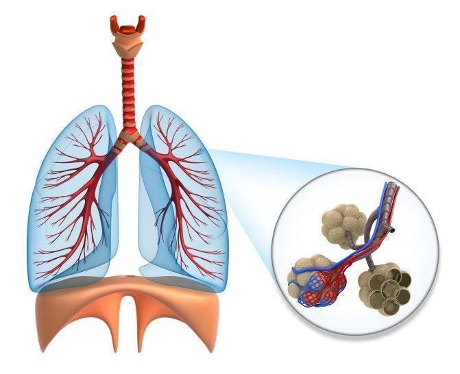 Симптомы пневмонии (воспаления лёгких) без температуры