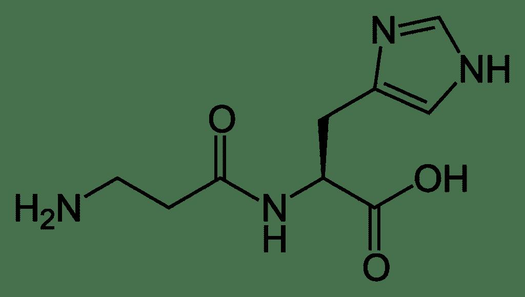 Карнозин: список лучших препаратов с ценами