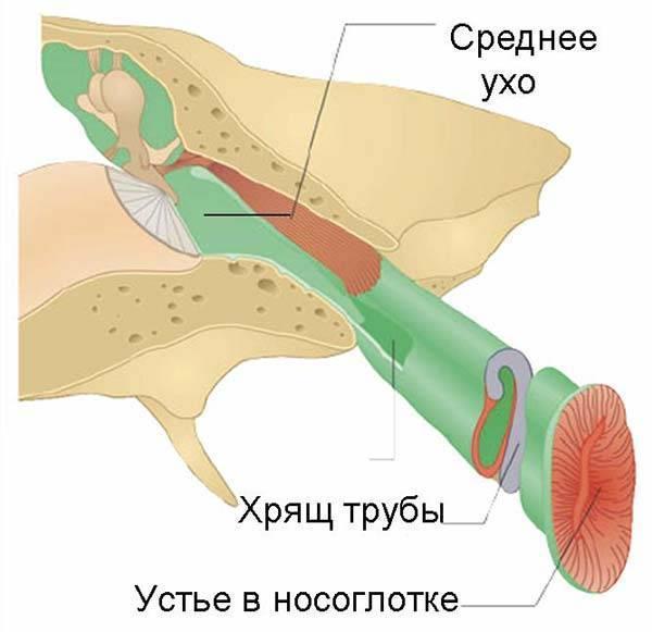 Причины, симптомы и лечение двухстороннего отита