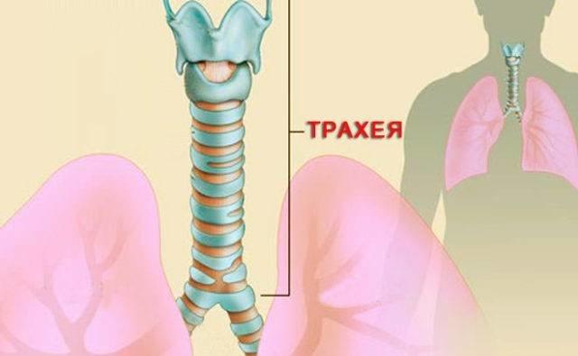 Бронхиальная астма сухой кашель ночью лечение