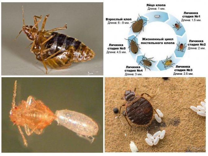 Фуфанон: популярный универсальный инсектицид и акарицид