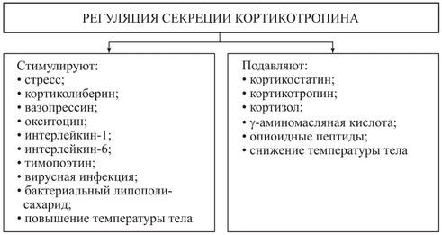 Адренокортикотропный гормон — википедия с видео // wiki 2