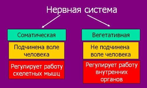 Основные заболевания периферической нервной системы