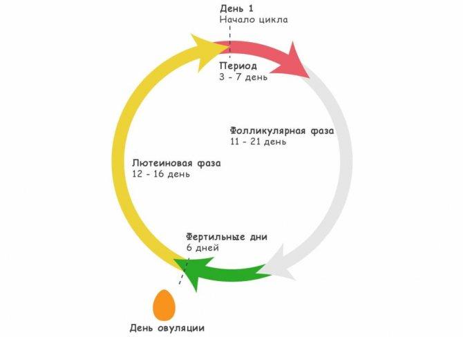 Препараты восстанавливающие менструационный цикл лучшие. нарушение месячного цикла: причины, как восстановить