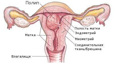 Что такое обратное развитие эндометрия?