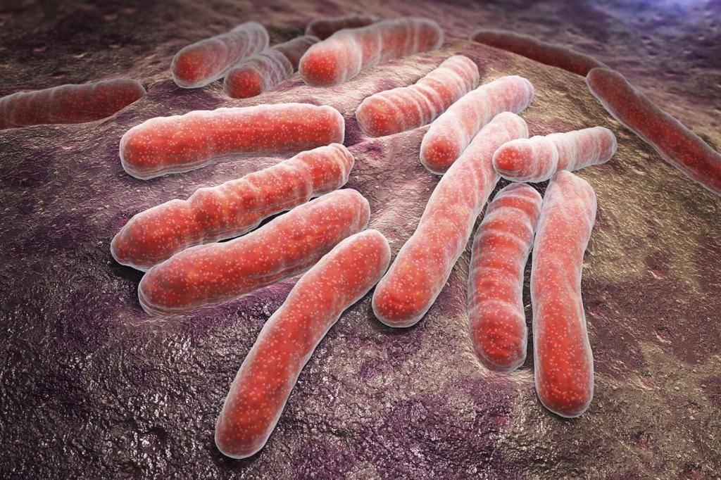 Мокрота при туберкулёзе