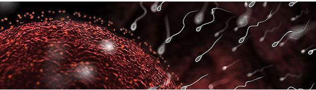 Мужское здоровье при планировании беременности. планирование беременности и мужское бесплодие