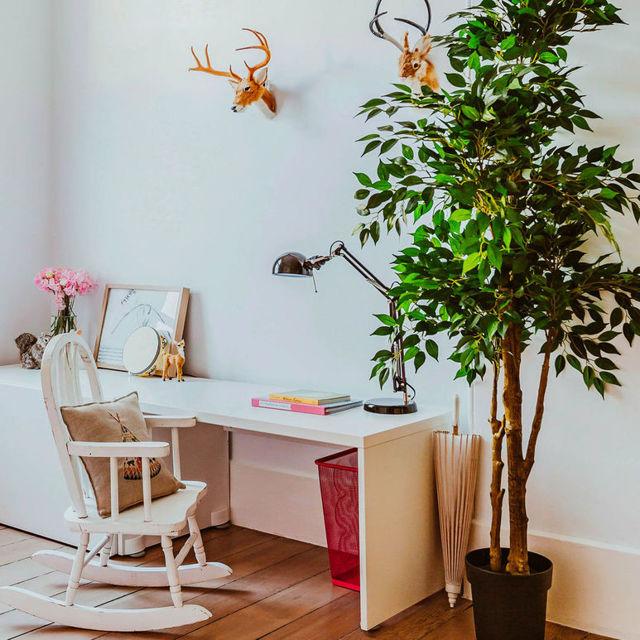 10 лучших комнатных цветов и растений для офиса