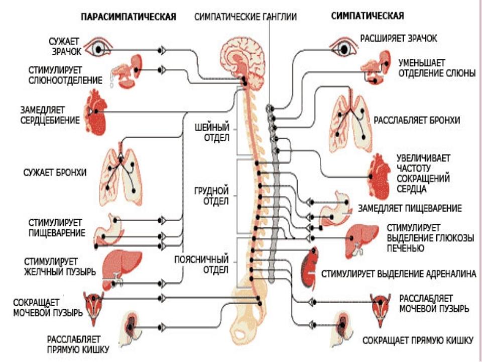 Симптомы и лечение нервного истощения