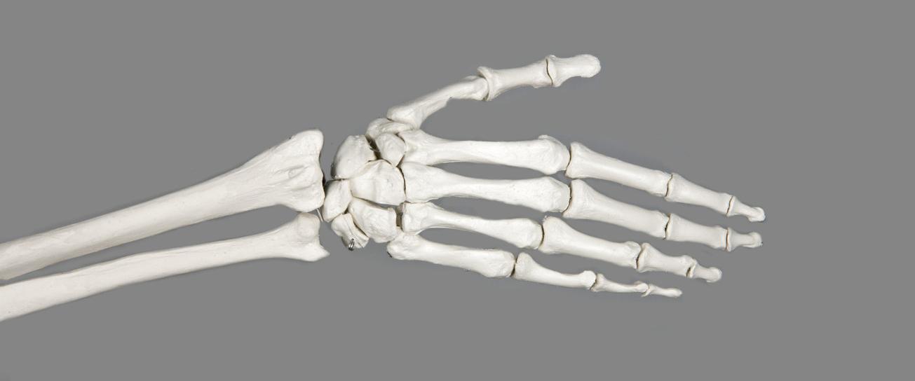 Что полезно для укрепления костей – 7 лучших продуктов по данным исследований