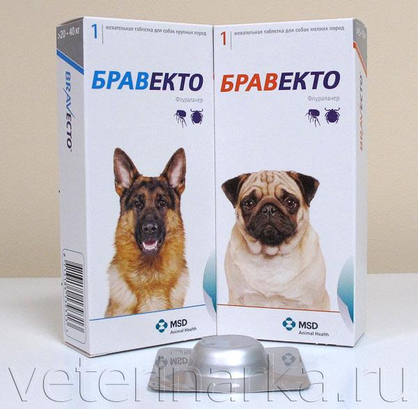 Бравекто: препарат нового поколения против блох и клещей
