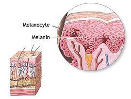 Меланин - melanin - qwe.wiki