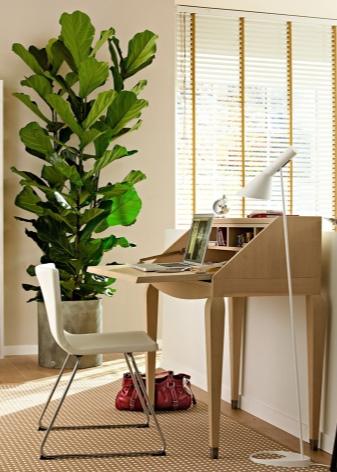 Растения, которые должны быть в офисе — разъясняем суть