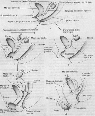 Преждевременная эякуляция: причины и особенности лечения