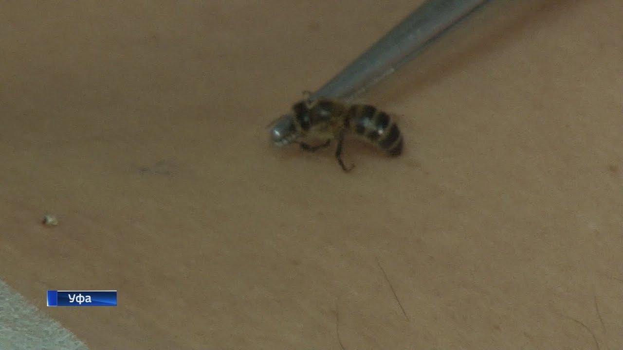Пчелиный яд. целебные свойства пчелиного яда