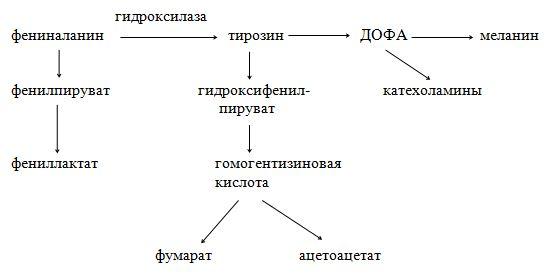 Тиреолиберин википедия