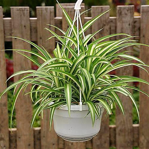 Растения, которые помогут очистить воздух в помещении