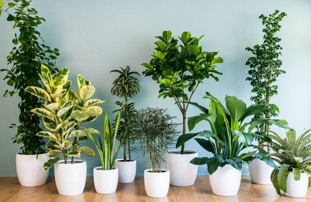 Растения, очищающие воздух в квартире
