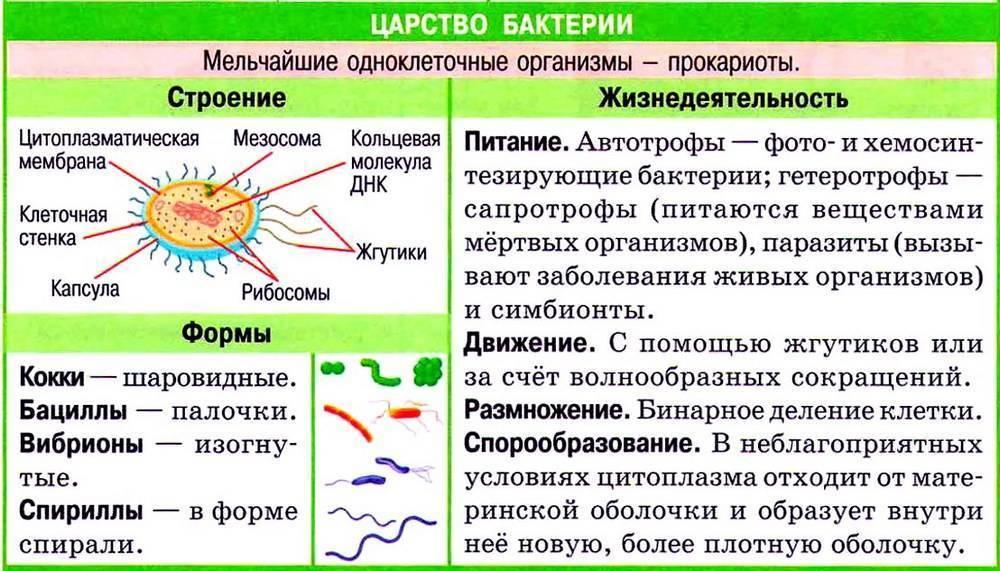 Вредные бактерии – возбудители болезней человека