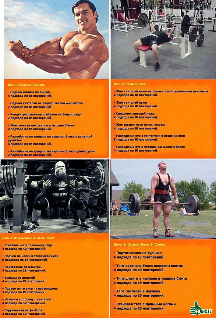 Правильное питание для эктоморфа: меню для набора мышечной массы