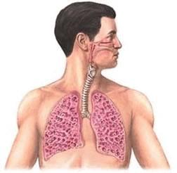 Экзогенный аллергический альвеолит: этиология, патогенез, лечение