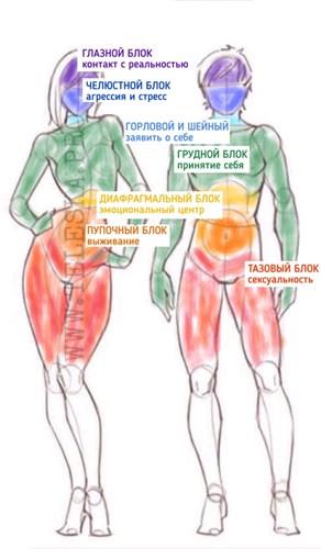 Длинная приводящая мышца — sportwiki энциклопедия