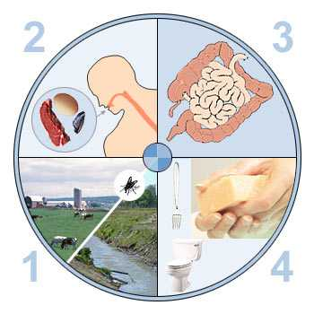 Что такое инфекционный гастроэнтерит — лечение для детей и взрослых