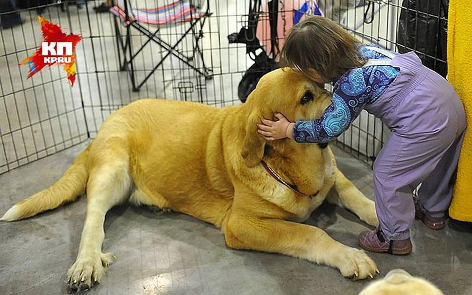 Собачий жир при туберкулезе: противопоказания, как принимать?