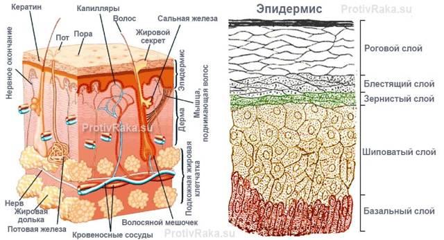 Базалиома кожи носа — раковая опухоль, но не приговор
