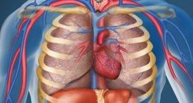 Овальное окно в сердце у новорожденного 2 мм