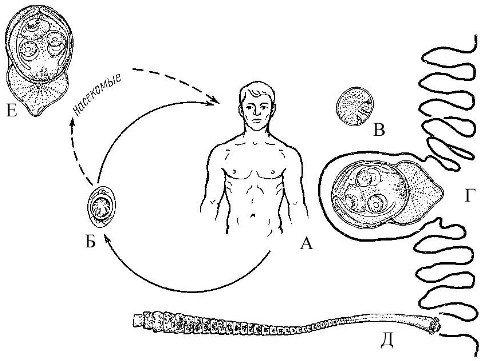 Методы диагностики гименолепидоза