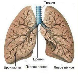 Оказание неотложной помощи при приступе бронхиальной астмы