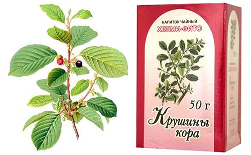 Крушина: виды, свойства, применение, противопоказания, сочетание с другими лекарственными растениями и средствами, рецепты