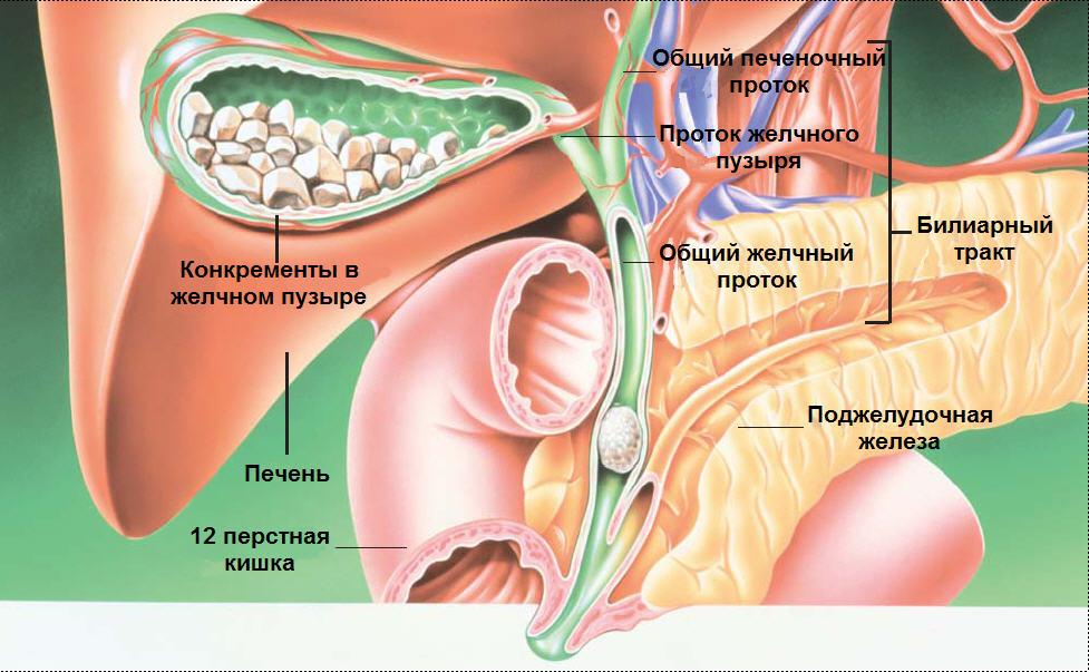 Поджелудочная железа, диета — что можно, что нельзя. совет врача